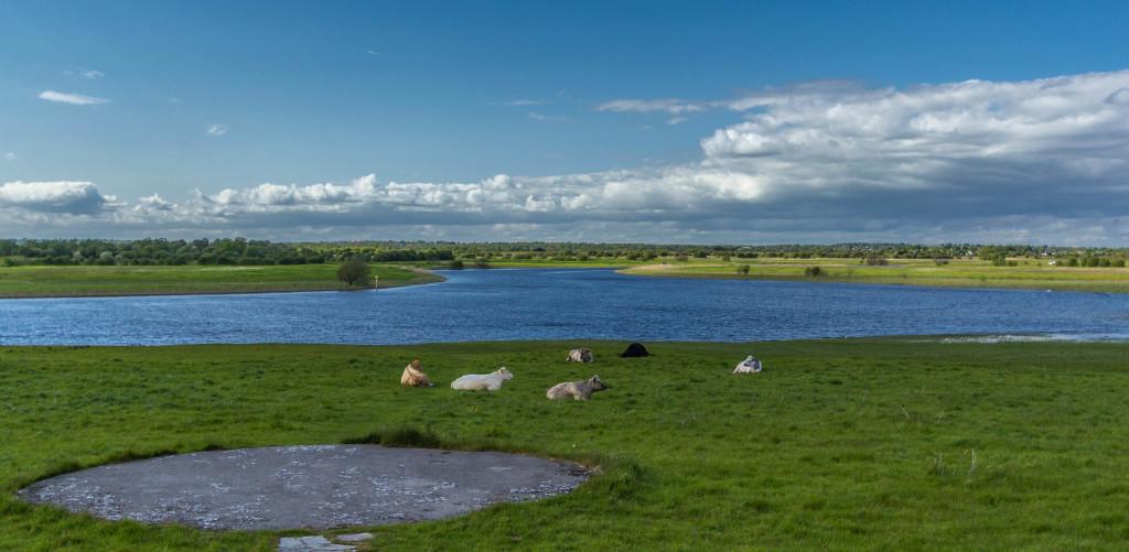 Padang rumput Irlandia fotografer Dani Rosyadi