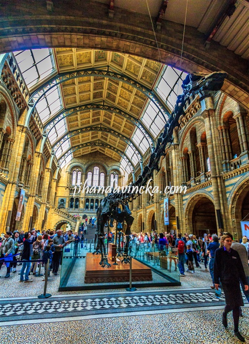 Natural History Museum Center Hall