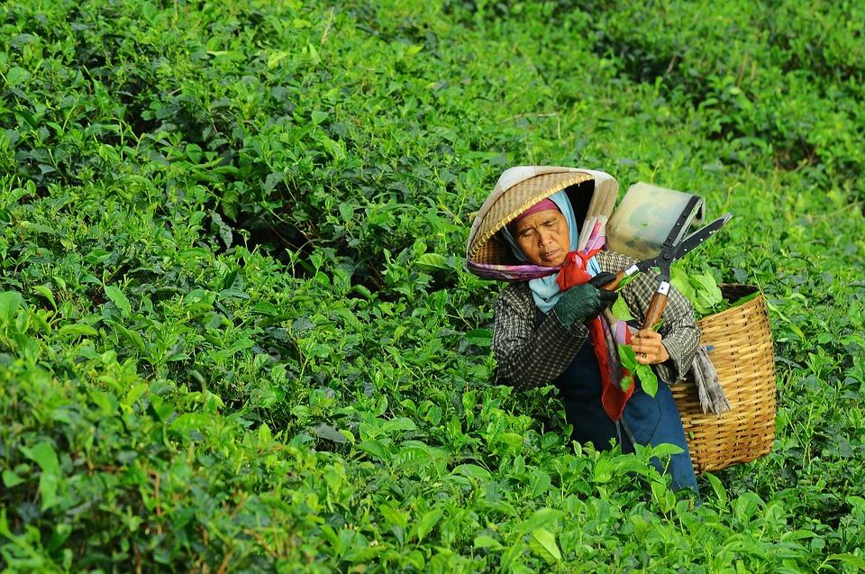 Hidup di Asia ... penuh dengan kerja keras :) (gambar : pixabay.com)